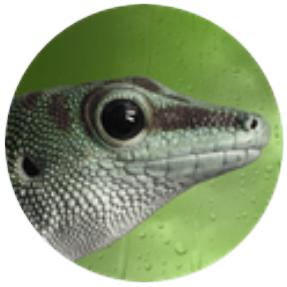 Gecko im Kreis