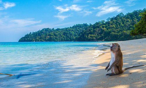 Affe am Strand